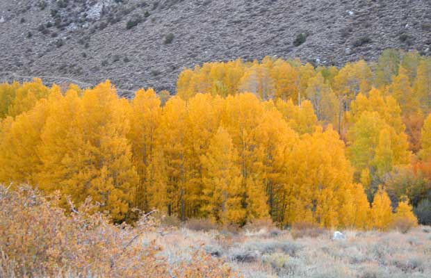 The colors of October in the Sierra Nevada on the road to Bishop's South Lake