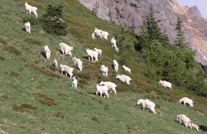The herd alerted to our presence move off towards the steep rock bluffs.