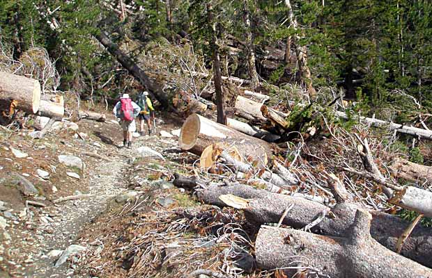 The wind-blown devastation to the forest south of Red's Meadow