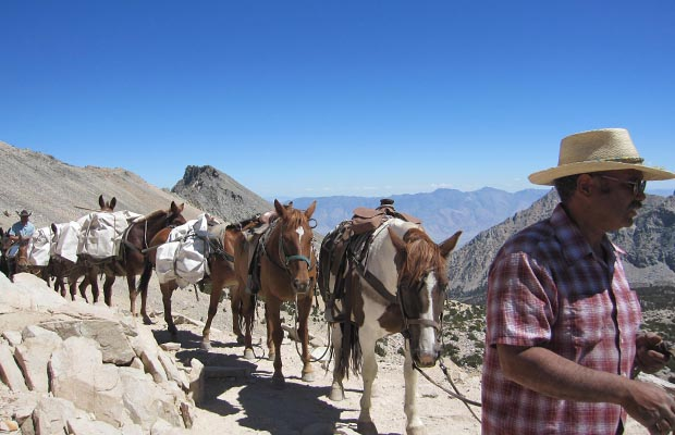 Another large mule-train crossing Kearsarge Pass