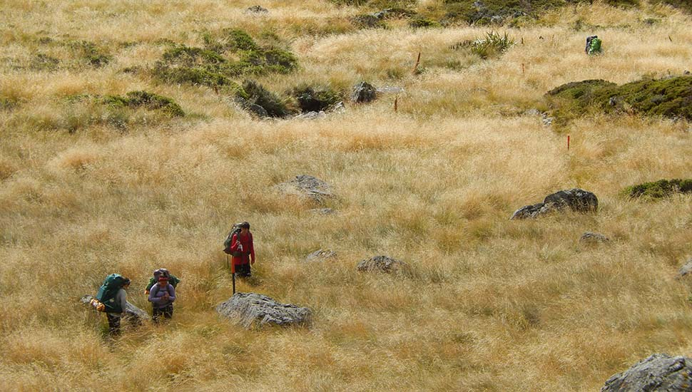Hikers moving north - downhill from the Upper Travers Hut