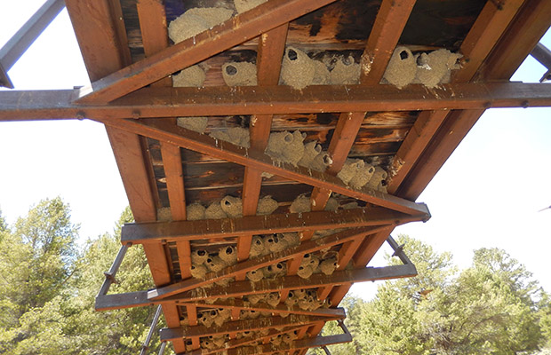 Swallow nests beneath the PCT Kern South Fork bridge