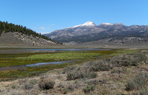 View of Olanche Peak from near the PCT and South Fork of the Kern.