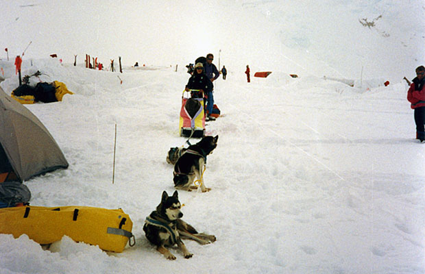 A rare sight on the mountain - a dog sled team at the 14,200' camp.
